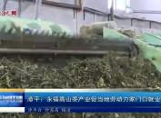 漳平:永福高山茶产业促当地劳动力家门口就业