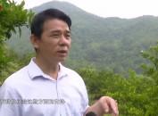 武平岩前洋坑村:服务型党组织引领村美民富新农村建设