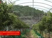 永定:倾力打造现代农业发展样本 助力精准扶贫