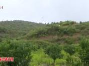武平岩前峰贵村:实施乡村振兴战略 让农业强农村美农民富