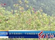 武平县尧禄村:千亩桃园喜丰收旅游采摘两不误