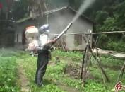 长汀:开展卧龙山景区森林病虫害防治 进一步营造良好生态环境