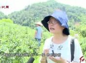 """新罗:复合采摘游""""热一夏"""""""