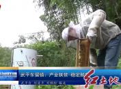 武平东留镇:产业扶贫? 稳定脱贫