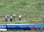 """连城长较村:""""家庭农场+贫困户""""推进脱贫攻坚"""