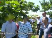上杭:电商深度介入 助推农民增收