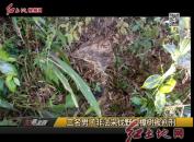 三名男子非法采伐野生樟树被判刑