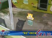 """""""萌宠""""动物乐园"""