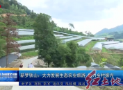 新罗铁山:大力发展生态农业旅游助力乡村振兴