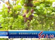 上杭白砂镇:葡萄飘香助力产业扶贫