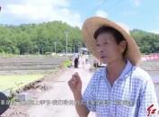 """上杭:""""共享农机""""引领农业发展新模式"""