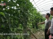 武平:加强产前产中产后品质监管 推动百香果特色产业做大做强