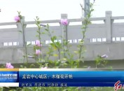 龙岩城区:木槿花开艳
