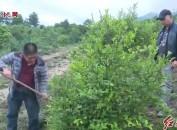 发展特色农业产业 助力乡村振兴
