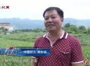 """""""中国好人""""林标城:9年义务献血26万多毫升"""