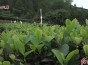 漳平被批准创建省级现代农业产业园