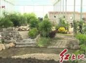 新罗区铁山镇:立足葡萄优势产业   推进农业农村现代化
