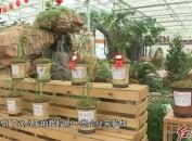 2018中国·连城寒兰节暨首届寒兰精品展开展