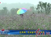 龙津湖:花海盛开 市民开怀