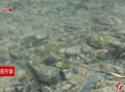 新罗:扎实开展河长制工作 全面提升辖区流域水质