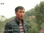曹昌仪:槐猪放养 坚守品质