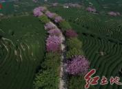 红尖山隧道开通 赴永福赏樱花不用翻山越岭了!