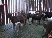 发展羊养殖 转产转岗促增收