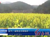 武平:油菜花开春意浓