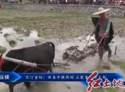 长汀童坊:新春开耕热闹 正能量宣传火热