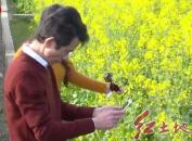 上杭:百亩油菜花盛开 吸引八方游客来