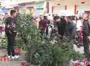 连城揭乐:传统庙会 苗木受欢迎