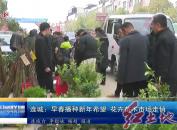 连城:早春播种新年希望? 花卉苗木市场走俏