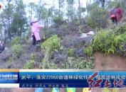 武平:落实22060亩造林绿化任务 提高造林成效