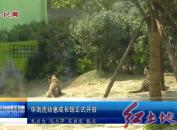 華南虎幼崽成長館正式開放