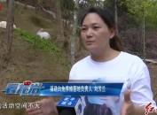 武平:福建首个白兔林下放养试验基地
