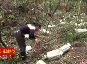 武平:大力发展林下经济 努力打造全国最大紫灵芝生产基地