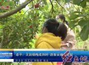 漳平:又到杨梅成熟时 游客采摘竞尝鲜