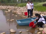我市开展龙津湖公园投放鱼苗活动