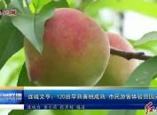 连城文亨:120亩早熟黄桃成熟 市民游客体验田园采摘乐
