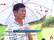 武平:500多亩农田受淹 干群灾后生产自救忙