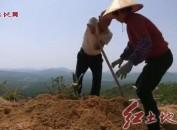 """""""断臂铁人""""兰林金获中国生态文明奖"""