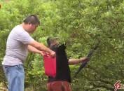 """连城:中国地瓜主题公园""""莓梅采摘""""森林旅游文化节"""