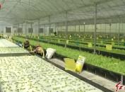 市人大常委会开展现代农业发展代表视察活动