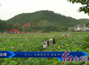 """长汀:古城荷花节 游客为""""荷""""来"""