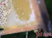 首届白沙蜂蜜大赛及农产品品鉴会
