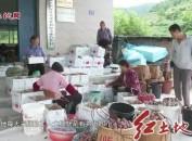 連城四堡:萬畝芙蓉李豐產增收果農樂