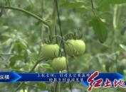 上杭古田:引进太空果蔬种植 助推乡村旅游发展