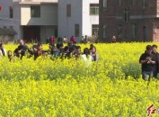 我市璧洲、园田、东湖三个村获2019年省级重点改善提升历史文化名镇名村和传统村落补助