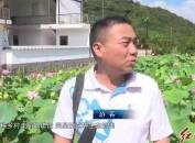 新罗黄地村:百亩荷花竞放 助力乡村振兴
