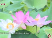 连城:第五届中国冠豸山·塘前荷花节开幕